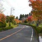 【周辺】霧島乗馬クラブ沿いの道路は紅葉がきれい(11月7日)