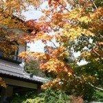 【外観】当館の紅葉はやはり11月中旬以降でしょうか。