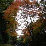 【周辺】えびの高原へ向かう道路はいろいろな形の紅葉が見られます。