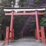 【霧島東神社】本殿までの階段がりますので、足が不自由な方はちょっと大変かもしれません…