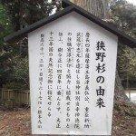 【狭野神社】狭野杉