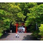 【霧島神宮】本殿への階段
