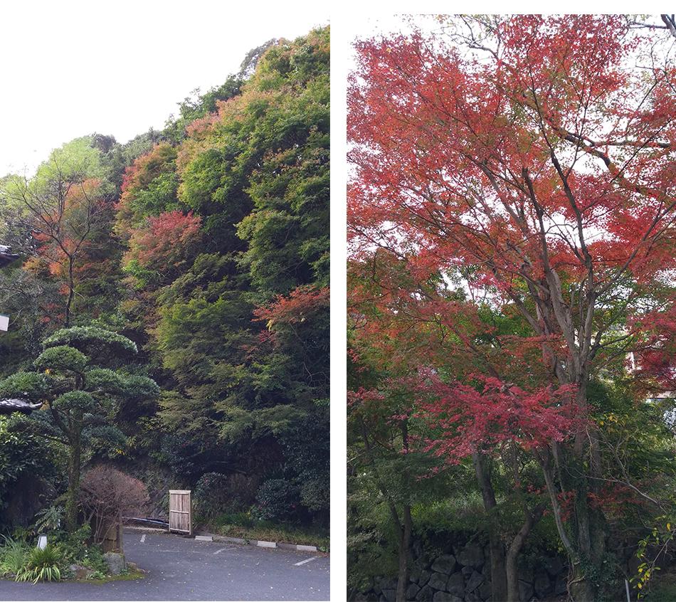 静流荘周辺の紅葉